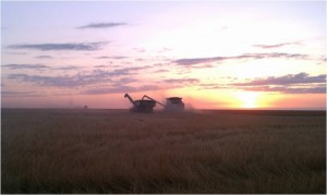 AGCO Wheat Sunset