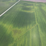 Aerial photography used to develop yield loss prediction maps and prescriptions for where more nitrogen fertilizer is needed.