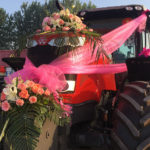 Leading vehicle of the wedding team — High-powered Massey Ferguson Tractor MF 2404