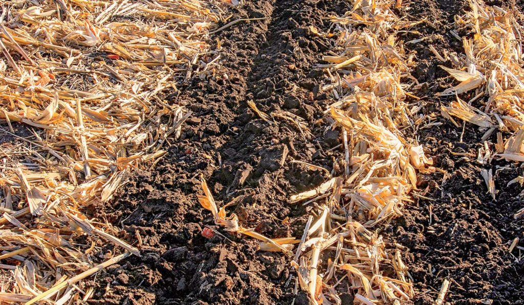 Strip tilling, shown here in a corn field, is a tilling method that can help conserve moisture and warm up soil in the spring.