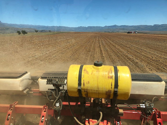 MF Planter in field, South Africa