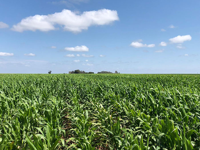 Crop Tour maize plot in locations in South Africa