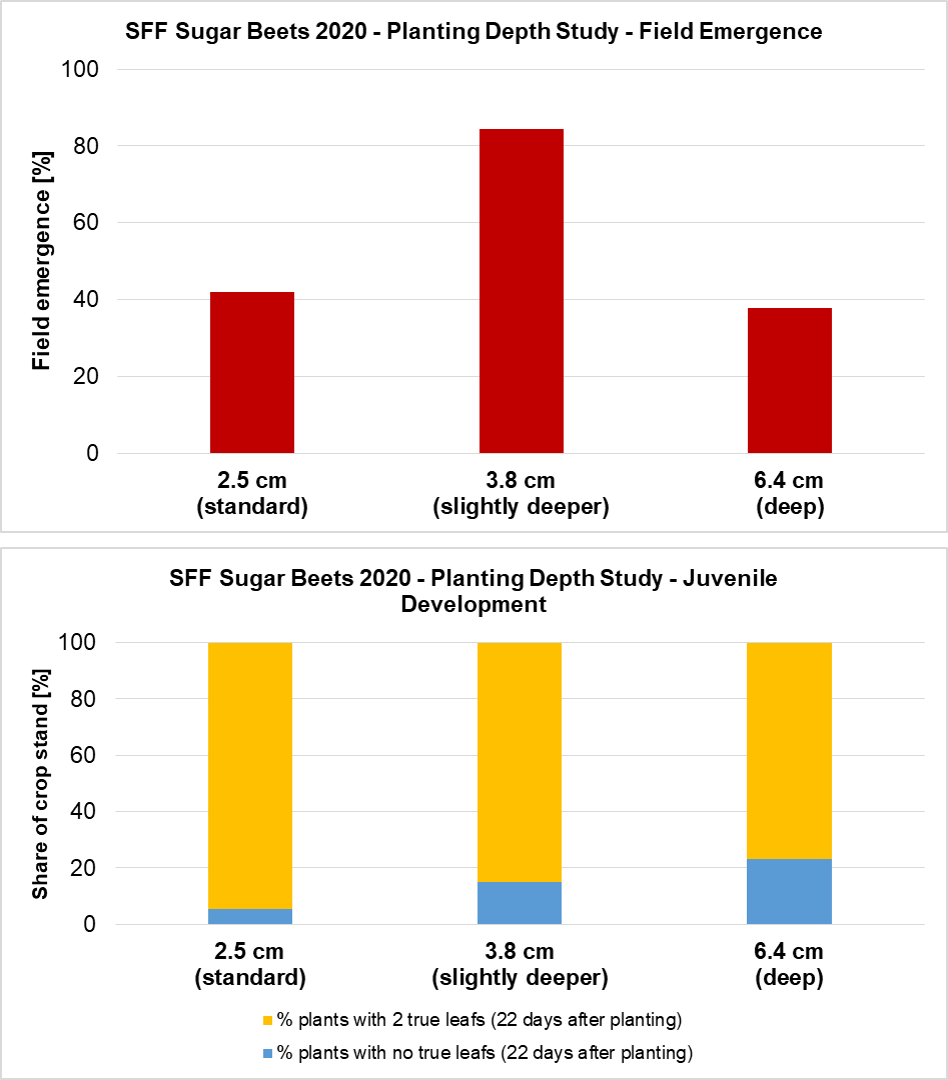 Field emergence and juvenile development of sugar beets in the 2020 Planting Depth Study.