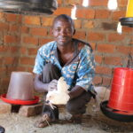 A Zambian poultry farmer takes care of his flock.